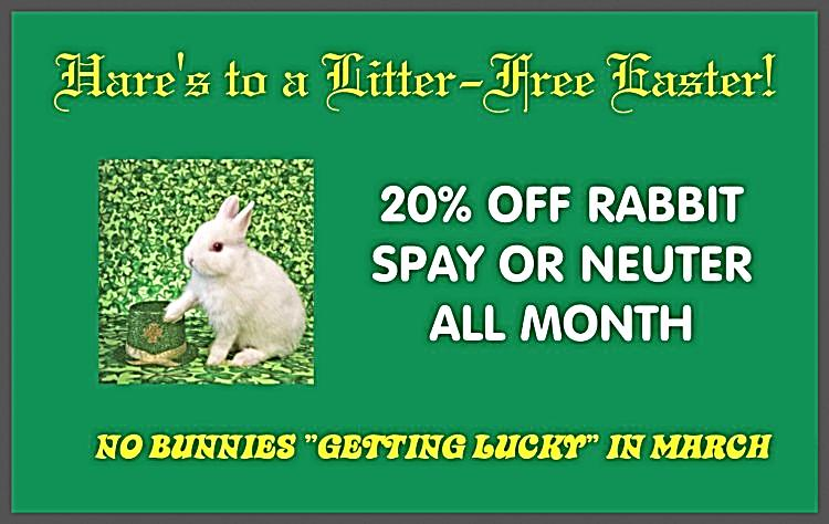 Current Monthly Specials - Emory Animal Hospital 3ee464112